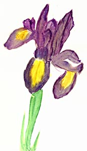 Iris - By Judy Cairns